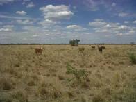 Campo En Venta En Malbrán. 3200 Ha. Mixta.