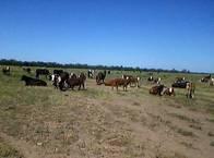 Campo En Venta En Pampa Del Infierno 900 Ha. Apto Agric