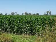 Campo En Venta. San Genaro 20 Has Agrícolas. Cerca Ruta