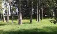 Campo En Zárate