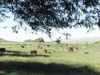 Campo Ganadero 1500 Has. Loncopué, Neuquén