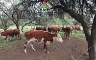 Campo Ganadero En Venta En San Luis,san Fco Monte D Oro