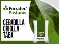 Cebadilla Criolla Taba