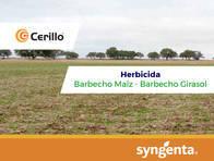 Herbicida Cerillo ® Paraquat + Diuron - Syngenta