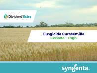 Fungicida - Curasemilla Dividend ® Extra