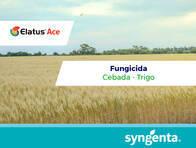 Fungicida Elatus® Ace - Syngenta