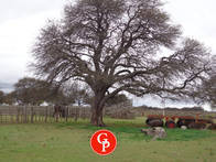 En Venta 1.040 Has. Parera - La Pampa -