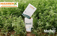 Fertilizante Maxiren K (Maxiren + Potasio) - Mochec