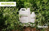 Fertilizante Nutricel - Mochec
