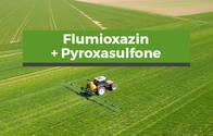Herbicida Flumioxazin + Pyroxasulfone