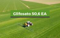 Herbicida Glifosato Equivalente acido 50,6