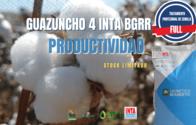 Semillas De Algodón Guazuncho 4 INTA BGRR - Tratamiento Full
