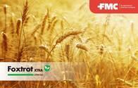 Herbicida Foxtrot Xtra Fenoxaprop + Cloquintocet- FMC