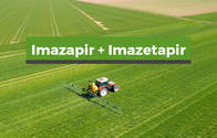 Herbicida Imazapir + Imazetapir