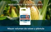 Inoculante Y Bioestimulante Indigo Para Semilla De Maíz