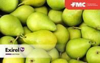Insecticida Exirel TM Cyantraniliprole  - FMC