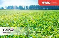 Insecticida Hero® Bifentrin + Zetacipermetrina - FMC
