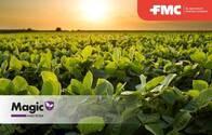 Insecticida Magic Bifentrin + Imidacloprid - FMC