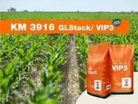 Maíz KWS KM 3916 GL Stack