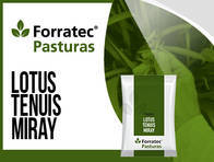 Pastura Lotus Tenuis Miray