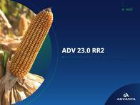 Maíz ADV 23.0 RR2