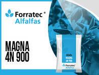 Alfalfa Magna 4N900