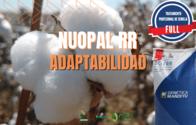 Semillas De Algodón NuOpal RR - Tratamiento Full