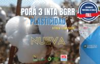 Semillas De Algodón Porá 3 INTA BGRR - Tratamiento Full