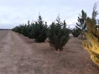 Servicio de Forestaciones A Campos