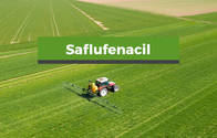 Herbicida Saflufenacil