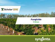 Fungicida Scholar ® 23 Fludioxonil - Syngenta