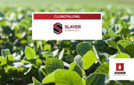 Fungicida Slayer Full Clorotalonil - Atanor