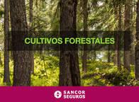 Seguro Para Cultivos Forestales