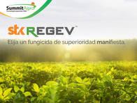 Fungicida Stk Regev - SummitAgro