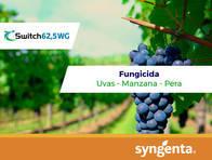 Fungicida Switch® 62,5 WG - Syngenta