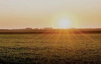 Seguros agrícolas e integrales